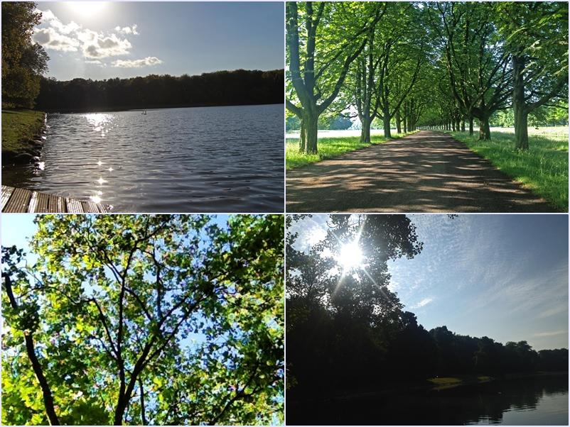 Collage_Park